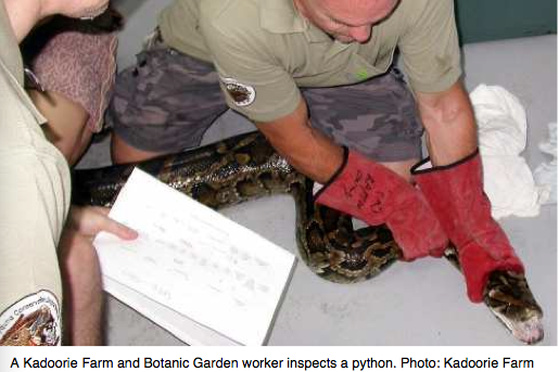 Pilot Project Returns 250 Pythons To The Wild In Hong Kong
