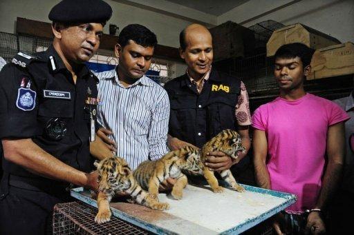 tigercubs_AFP